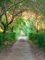 Enchanted Path_Stock by MJ84-StockPhotos