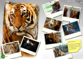 100th Dev: Tiger Collection by Foodtrip