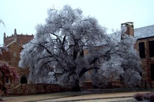 Leaves of Ice by mfuld