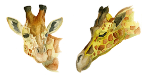 Giraffe Color Studies by GlossyToast