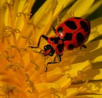 Leafbeetle13a by boron
