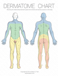 Dermatome Chart by thelastmiracle