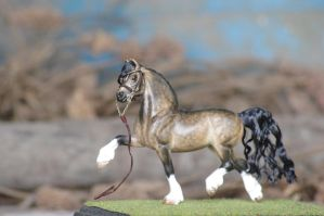 Buckskin Welsh cob cm stablemate by Puffinfire