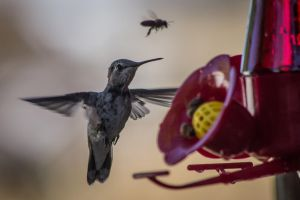The Birds and the Bees-2 by taliesin86001