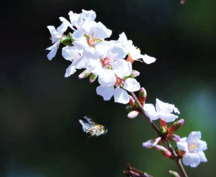 Bees and Blooms by Tsisqua-Ugidali