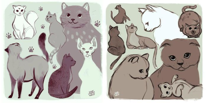 cats cats cats by mrokat