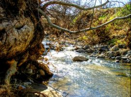 Cottonwood by the Creek by dozalt