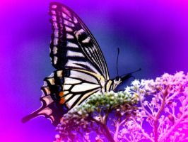life and times of a butterfly by tallon