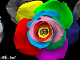 Colorful Rose by SupercoolTalha