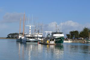 Woodley Island Marina by citreneowl