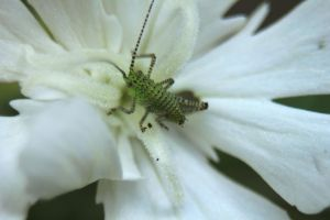 Little grashopper by jochniew