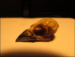 Sparrow skull by Vongrell