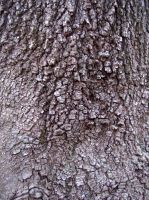 tree bark by turtledove-stock