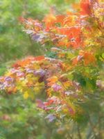 Leaves of Autumn by Chynna-B