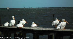 a flock on the dock by frebecca