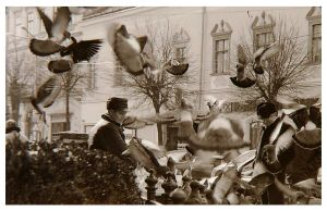 Feeding the pigeons. by pinyty