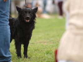 Moments from a Dog Show. by enor14