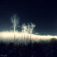 Transition by Weissglut