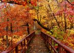 Burst of Fall Color by 12slauth
