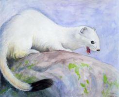 Ermine in Winter Coat by munchengirl