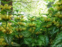 Yellow Archangel by jim88bro