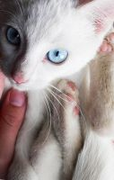 Sweet Little Kitten-close up by ace-of-finland