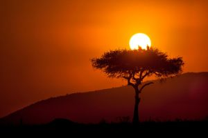 My Africa 44 by catman-suha