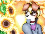 sunset , sunflower by LiMakao