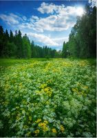 Meadows... by my-shots