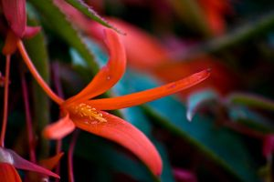 Orange flower by Sundseth