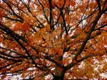 Autumn Branches by fotoworx1