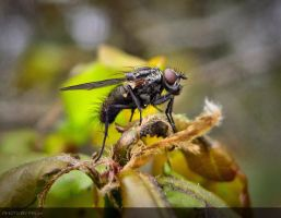 The Fly by phoenixxx72
