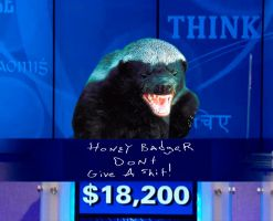 Honey Badger Final Jeopardy by ritter99