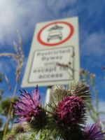 The Thistle and the flying motorcycle by DaddyHoggy