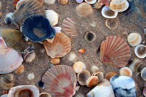 Sea shells by the sea shore by dpt56