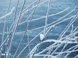 Frosted Branches 2 - stock by Synaptica-stock
