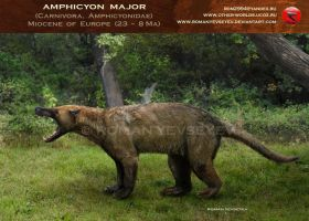 Amphicyon major by RomanYevseyev