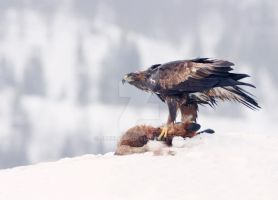 Golden Eagle with Ex-Fox 2 by joeelway