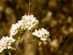 Blossom by ivan0494