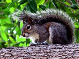 Another Squirrel by wavygoonAM