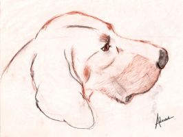 Coonhound dog 2 by raidan1280