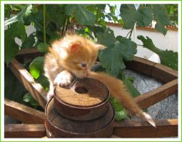 Kitty exploring by maccarta