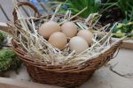 Easter Stock 16 by Malleni-Stock