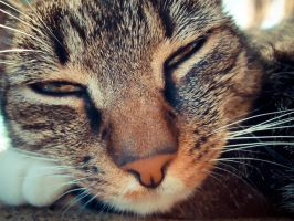 Sleepy cat by stewe12