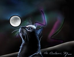 In the Northern Sky....scribbl by J0anna3