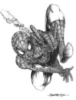 spidey by harveytsketchbook