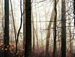 Woodland Fog: Fading Trees by TemariAtaje