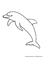 Dolphin by Writer-Colorer