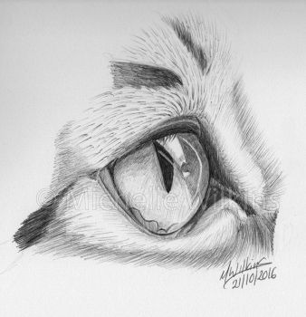 Cat eye Inktober by DragonsDust