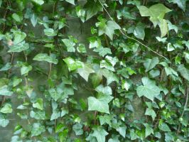 Ivy3 by Wicasa-stock